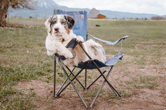 Viaja en camper con tu mascota
