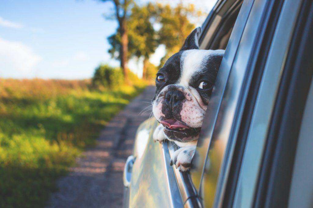 Viaja en camper con tu mascota yevana